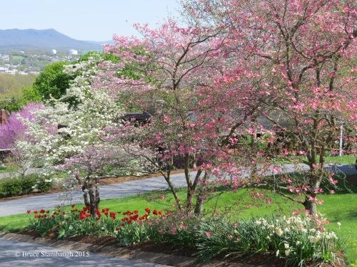 spring, Virginia, Shenandoah Valley