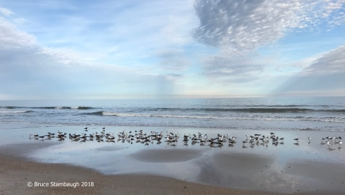 shorebirds, beach