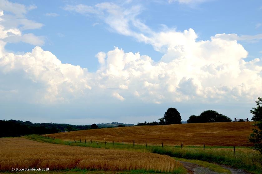 wheat and oats, Rockingham Co. VA