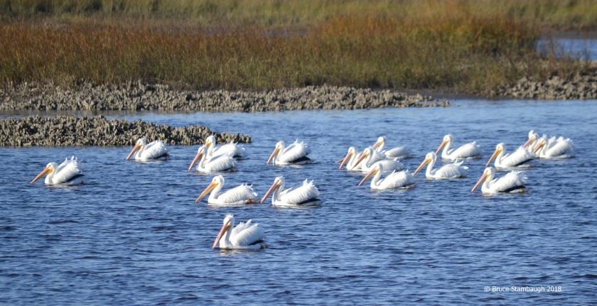 bird migration, Jacksonville FL