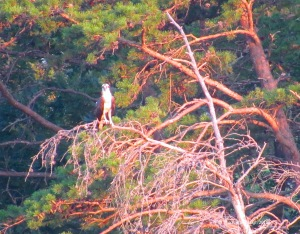 Osprey, Virginia