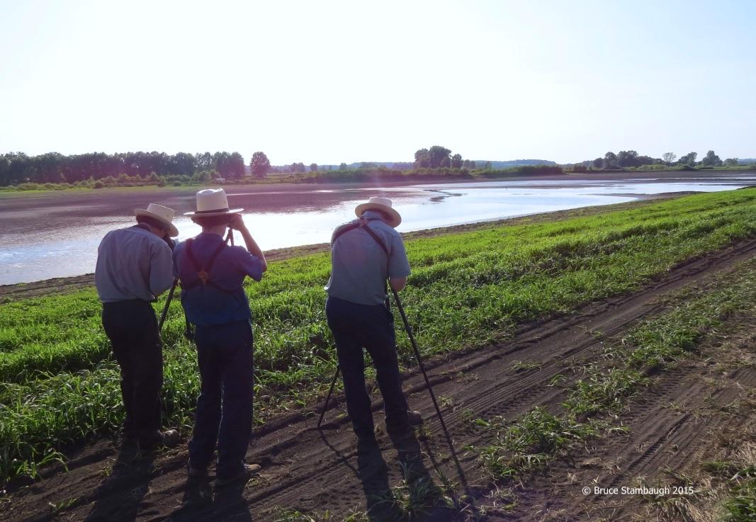 young birders, shorebirds
