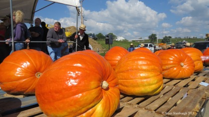 Giant pumpkins.
