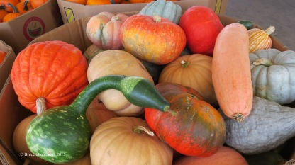 Gourds galore.