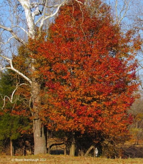 Shenandoah Valley, Rockingham Co.