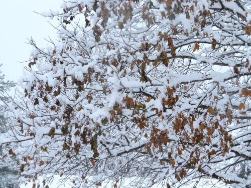 burnished leaves laden with snow