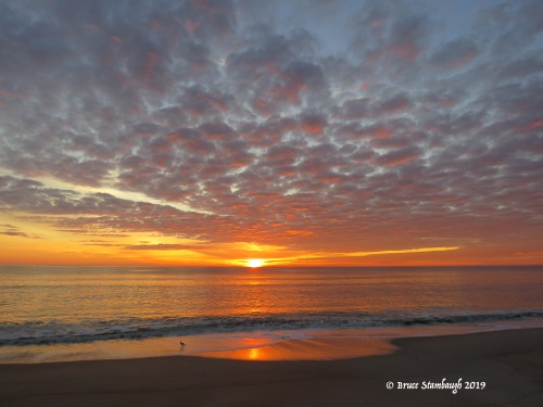 willet, Atlantic Ocean, sunrise photography, Fernandina Beach FL