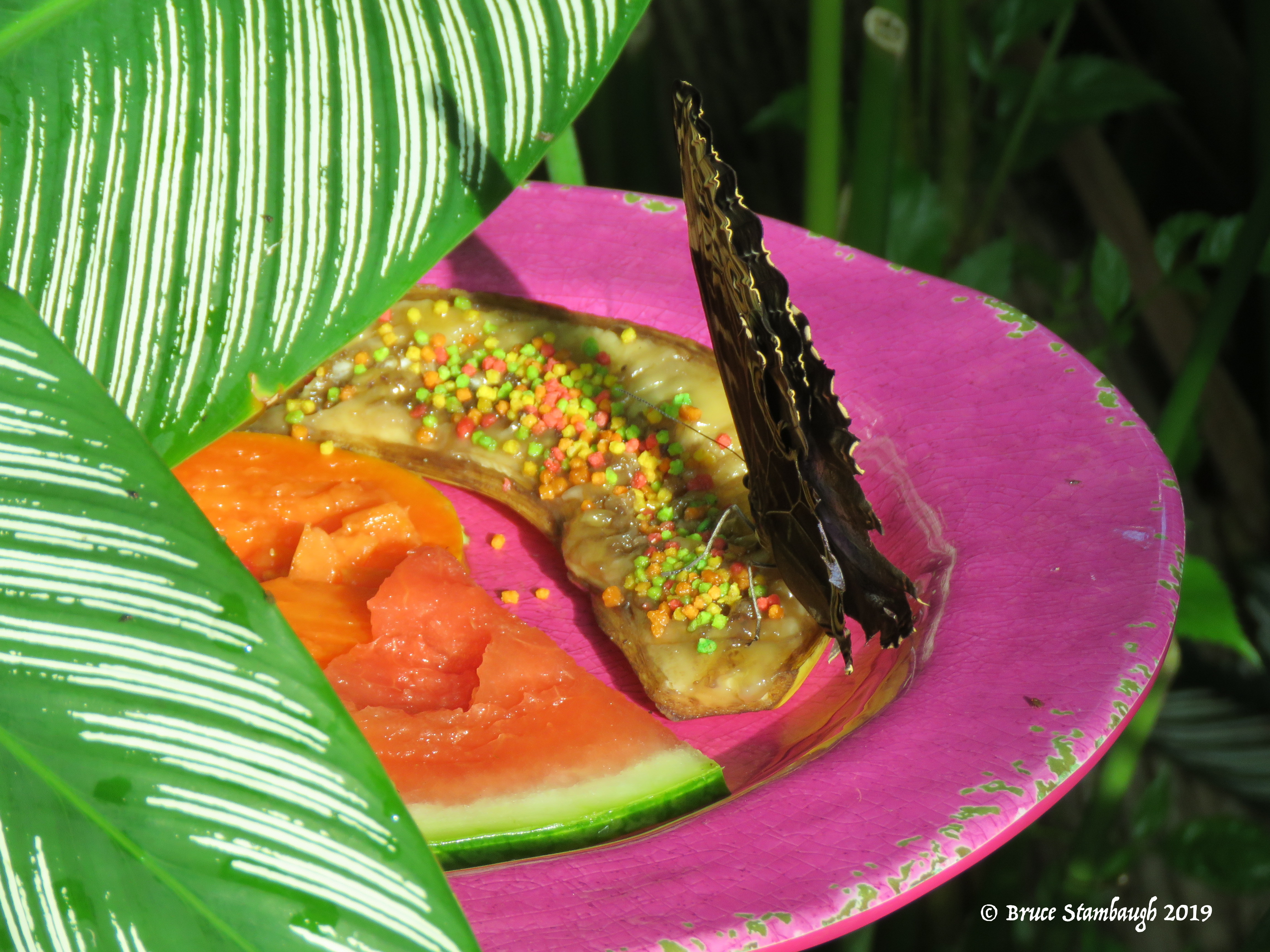 Butterfly Conservancy, Key West FL