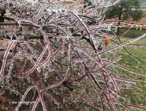 ice storm, Harrisonburg VA