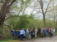 Searching for a Kirtland's Warbler.