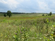 The big picture of Big Meadows.
