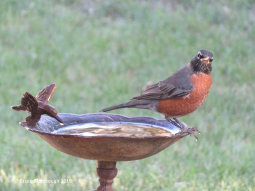 At the birdbath by Bruce Stambaugh