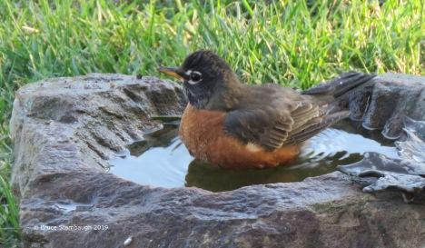 In the birdbath by Bruce Stambaugh