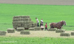 Gathering hay in Ohio.