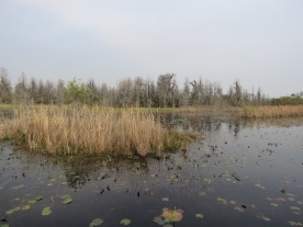 The wetland prairie.