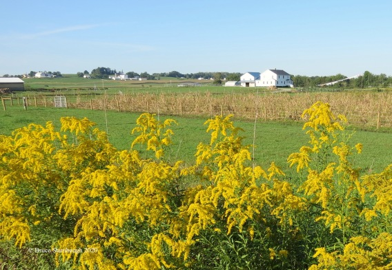 Rural September by Bruce Stambaugh