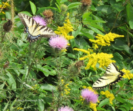 Butterflies and blooms by Bruce Stambaugh